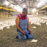 A Chicken Farm Opens Its Doors to Show It's Not Really a Farm. It's Something Much More Disturbing.