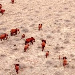 When These Drones Zoom In Over Elephants and Rhinos, They Stop Horrible Things From Happening.