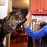Perfect Match: A Deaf Woman Adopts a Deaf Cat Who Knows Sign Language.