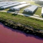 They Flew a Drone Over a Pig Farm to Discover It's Not Really a Farm. It's Much More Disturbing.