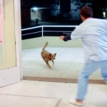 A Man Has a Stroke and Is Rushed to the Hospital. Now Watch What His Dog Does.