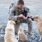 A Soldier Makes Friends With 3 Stray Dogs. Now Watch What They Do When a Bomb Goes Off.