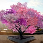 An Artist Developed an Unbelievable Tree That Grows 40 Kinds of Fruit.