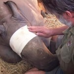 Poachers Put a Bullet In a Baby Rhino's Head and Left It for Dead. But the Story Doesn't End There.