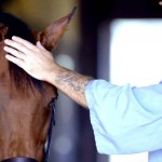 Perfect Match: A Horse On the Verge of Death Meets a Prisoner With No Hope.