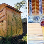This New Beehive Lets You Harvest Honey Automatically Without Disturbing Bees.