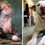 A Starving Dog Was Found Collapsed On the Street. 2 Months Later, He's Completely Unrecognizable.