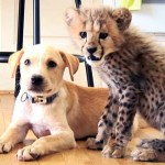 A Cheetah Cub and a Puppy Remind Us That Best Friends Love Us Just the Way We Are.