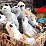 This Looks Like a Pile of Stuffed Animals. And It Is. But Look Closer and… Surprise!