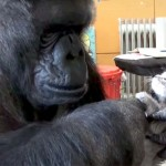 A Gorilla and a Box of Kittens Will Teach You the Real Meaning of Family.