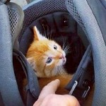 A Kitten Hid Under a Car and Fell In the Middle of a Busy Road. Now Watch a Heroic Biker Does.