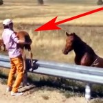 A Baby Horse Was Stranded On a Dangerous Road. Now Watch What a Heroic Stranger Does.