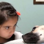 A Little Girl Stares Into the Eyes of a Dying Dog. Seconds Later… Unbelievable!