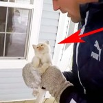A Family Finds a Frozen Kitten In the Snow. Now Watch Them Bring Him Back to Life.