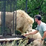 This Guy Returns a White Lion Back to the Wild. But What He Does First Makes Him My Hero.