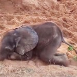 This Baby Elephant Was Rejected by His Herd. But Watch Who Shows Up Behind the Sand Pit.