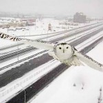 A Traffic Camera Accidentally Snaps This Beautiful Photo of a Snowy Owl.