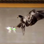 Dutch Police Are Training Eagles to Take Down Drones.