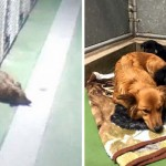 A Loving Dog Sneaks Out of Her Kennel at Night to Cuddle Terrified, Crying Puppies. Wow.