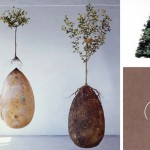 Forget Coffins — These Organic Burial Pods Will Turn You Into a Tree When You Die.