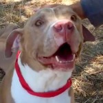 These Shelter Dogs Are Going Home for the First Time. And Their Reactions Are Priceless.