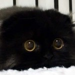 Meet Gimo, The Cat With the Biggest Eyes Ever.