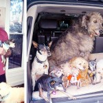 This Guy Devoted His Entire Life to Adopting Old Dogs Who Can't Find Forever Homes.