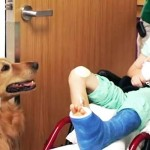 Their Son Was 'Lifeless' From an Accident. But After Meeting This Therapy Dog, Everything Changed.