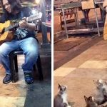 4 Music-Loving Kitties Come to Listen to a Street Singer Everyone Else Ignored.