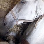A Farmer Begs His Horse Not to Die. Now Watch What He Does With Her Leg.