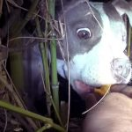 They Went to Rescue an Injured Little Dog Hiding In a Bush. What They Found Was a Big Surprise.