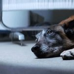 This Hard-Hitting PSA Is a Wake-Up Call to All Dog Owners. Wow.