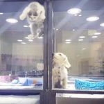 A Puppy Is Lonely Staying Overnight at This Pet Store. Now Keep Your Eye On the Kitten.