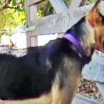 A Dog Runs Away Every Single Day. When Mom Discovers Where She Goes, She's In Tears.
