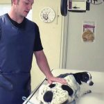 A Vet Rescues Pregnant Dog From 'Death Row'. Then, He Sees This In Her X-Ray.