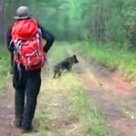 He Thinks a Missing Girl Is Dead. 11 Days Later, He Decides to Follow This Dog Into the Woods.
