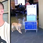 A Nervous Soldier Waits to Reunite With Military Dog… Then, Turns Around to Find Her Running to Him.