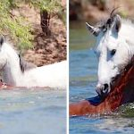 A Poor Baby Horse Begins to Drown Alone. Then, a Wild Stallion Knows Exactly What to Do.