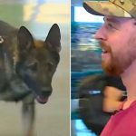 A Retired War Dog Is Ready to Be In His Forever Home With His Handler. Watch Their Reunion.