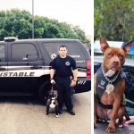 Local Cops Needed Cheaper K9s, So They Went to the Animal Shelter and Adopted Pitbulls.