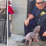 A Puppy Is Sad at the Shelter, Until She Reunites With the Firefighter Who Saved Her From Abuse.