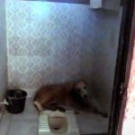 An Abandoned Dog Curls Up to Die In a Family's Bathroom, Then Realizes He's Being Saved.