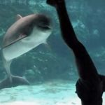 Watch This Girl Make a Dolphin Laugh… Really, It's Pretty Cool.