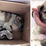 A Maniac Covers a Stray Puppy In Super Glue. Then, a Rescue Worker Realizes There's Still Hope.