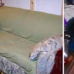 College Students Buy a Smelly Old Couch for $20 and Accidentally Find a Widow's Secret Fortune.