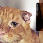 A Couple Takes a Chance On 'The Saddest Shelter Cat Nobody Wanted'. An Hour After Adoption…