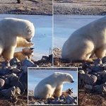 We Could Learn a Lot From This Chill Polar Bear Just Petting a Dog.