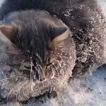 Heartbreaking Video Shows Cat Being Rescued After It Froze to the Ground.