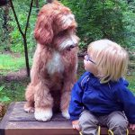 Family Is Nervous Foster Child Won't Adjust. But Then, He Meets Their Dog.