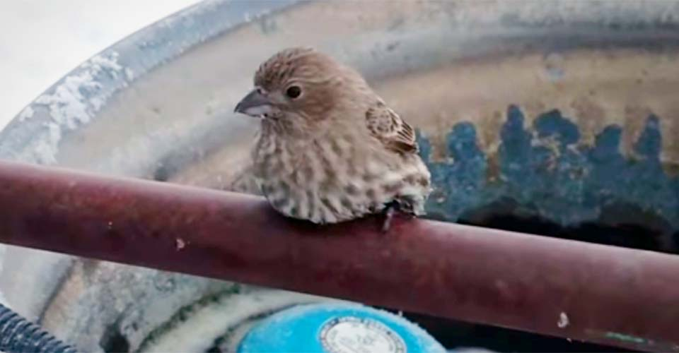 A Man Finds a Bird's Feet Frozen to a Pipe. His Ingenious Rescue Went Viral Overnight.